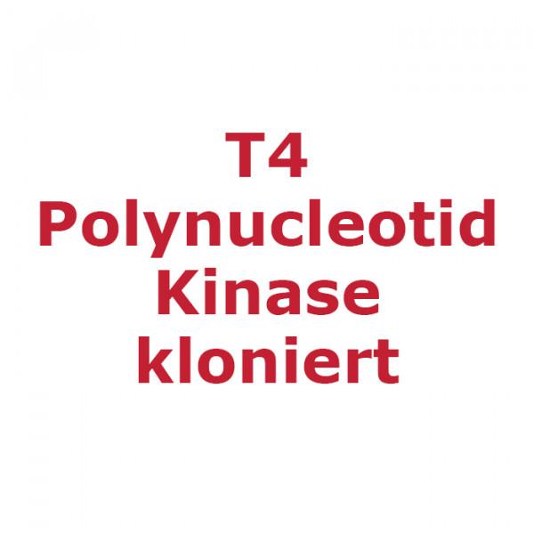 Artikelbild 1 des Artikels T4 Polynucleotid Kinase kloniert + Puffer, 10 U/µl