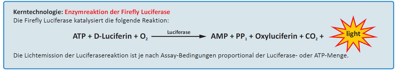Luciferase-Assay