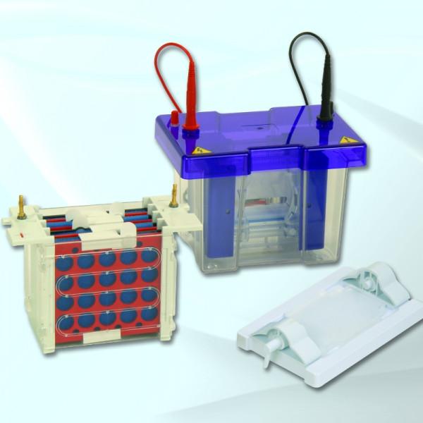 Artikelbild 1 des Artikels EasyPhor PAGE Mini Tetrad Elektrophorese/Blottting